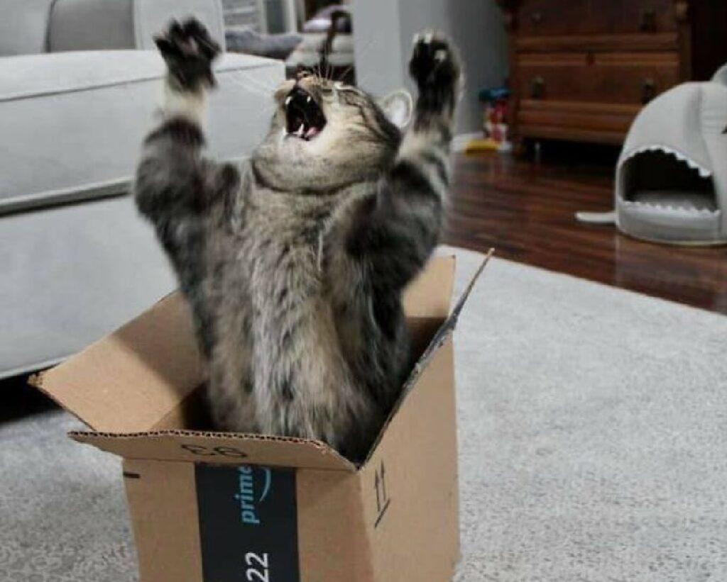 gatto fuoriesce da scatolone