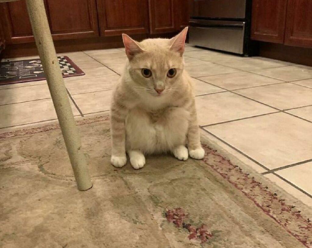 gattino raccolto prima di salto