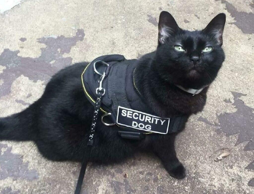 gatto sicurezza polizia