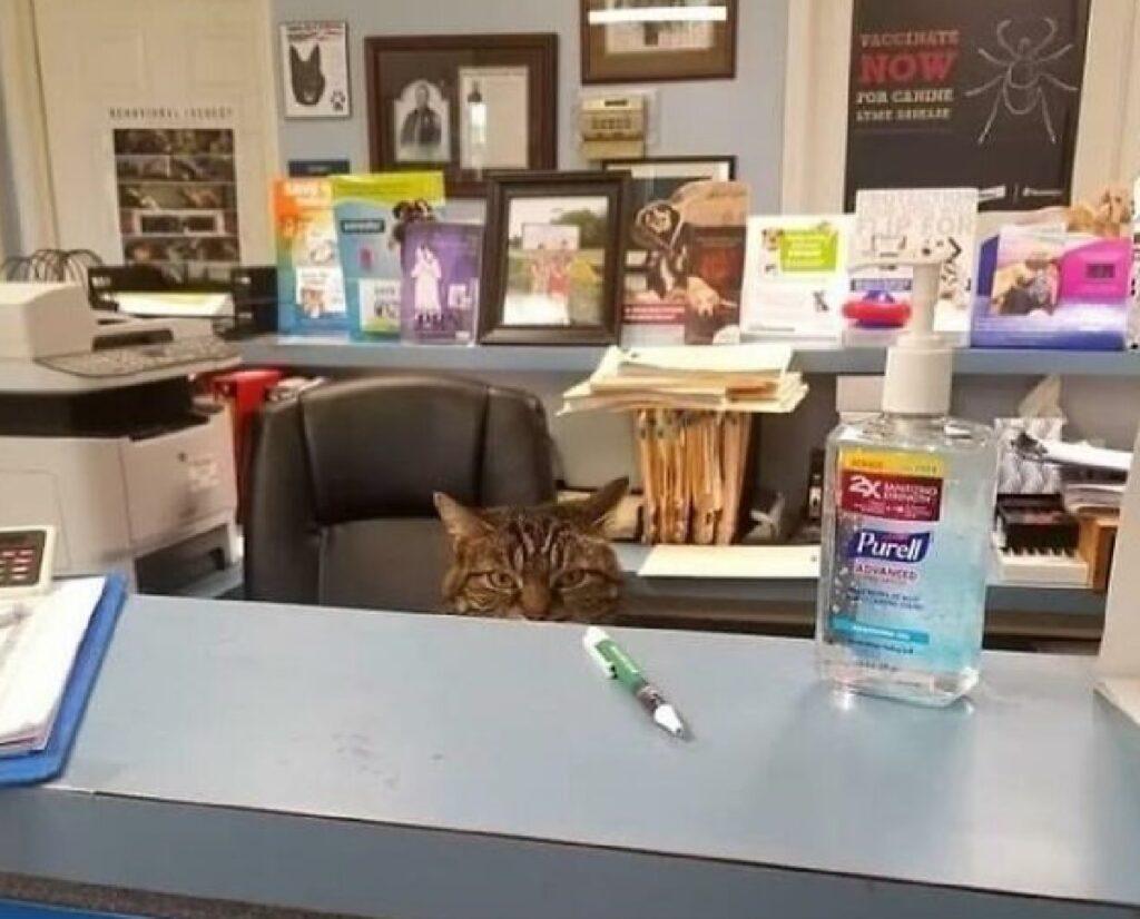 gatto nella reception