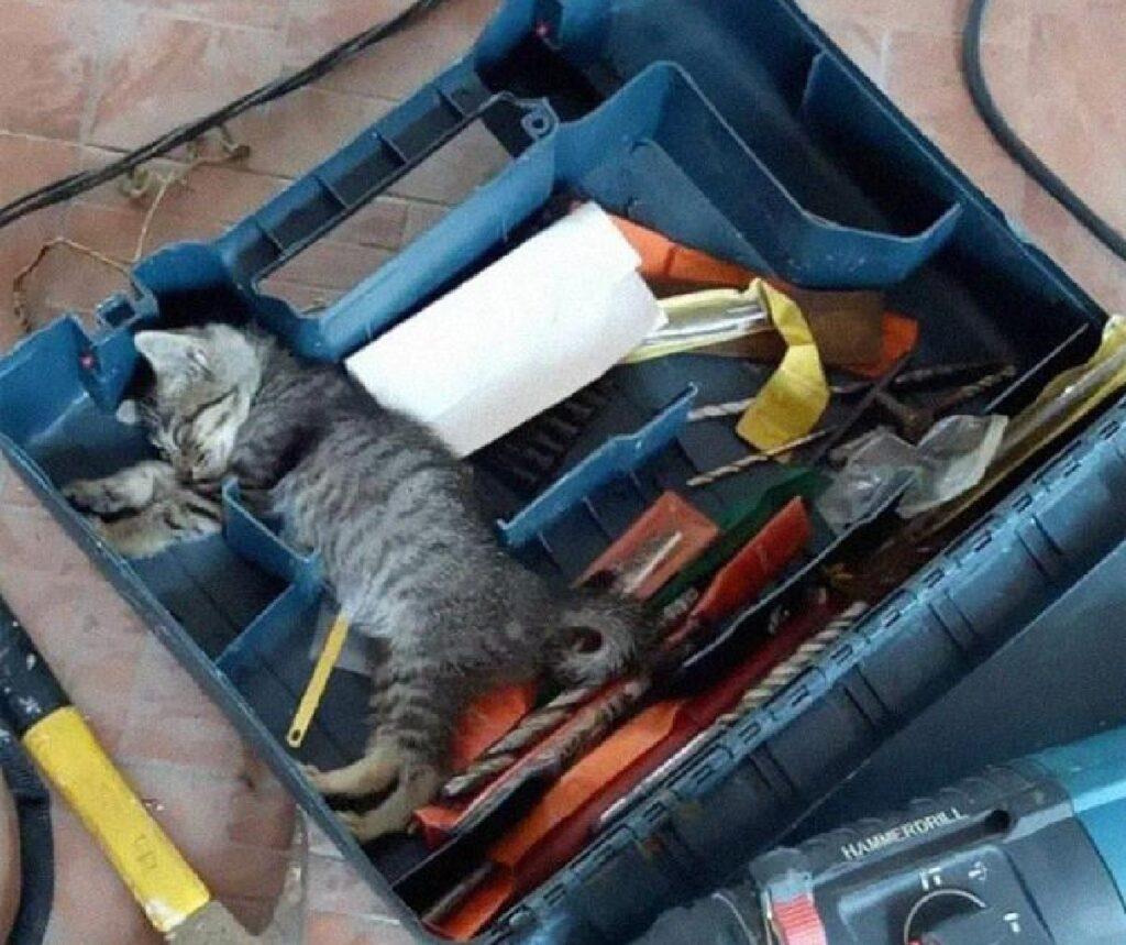 gatto dentro cassetta attrezzi