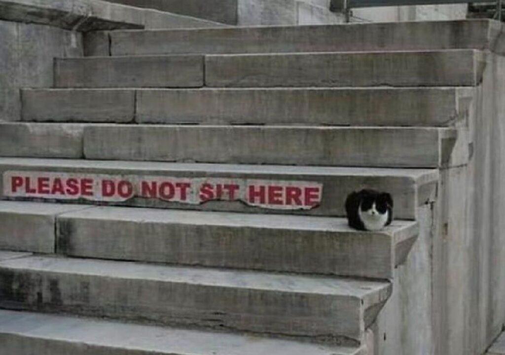 gatto si siede dove non dovrebbe