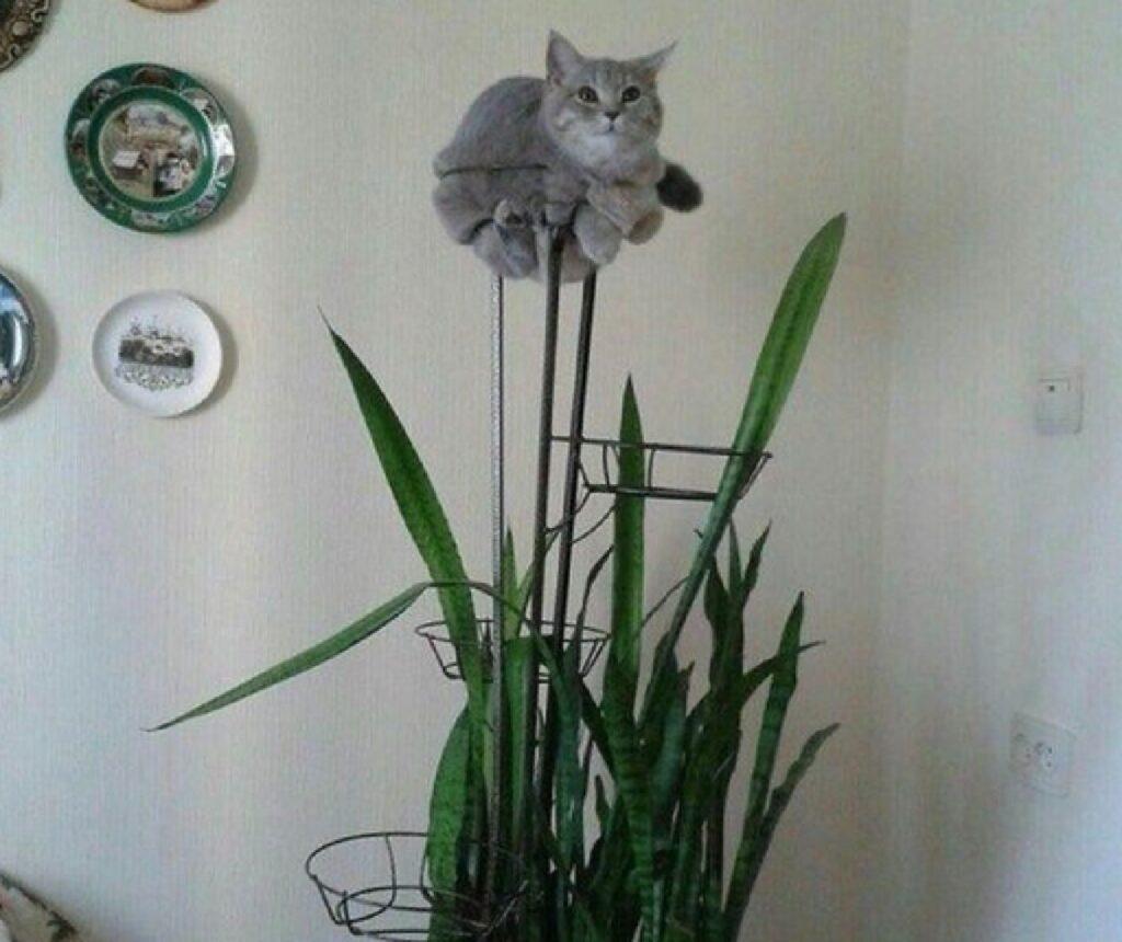 gatto al posto di pianta