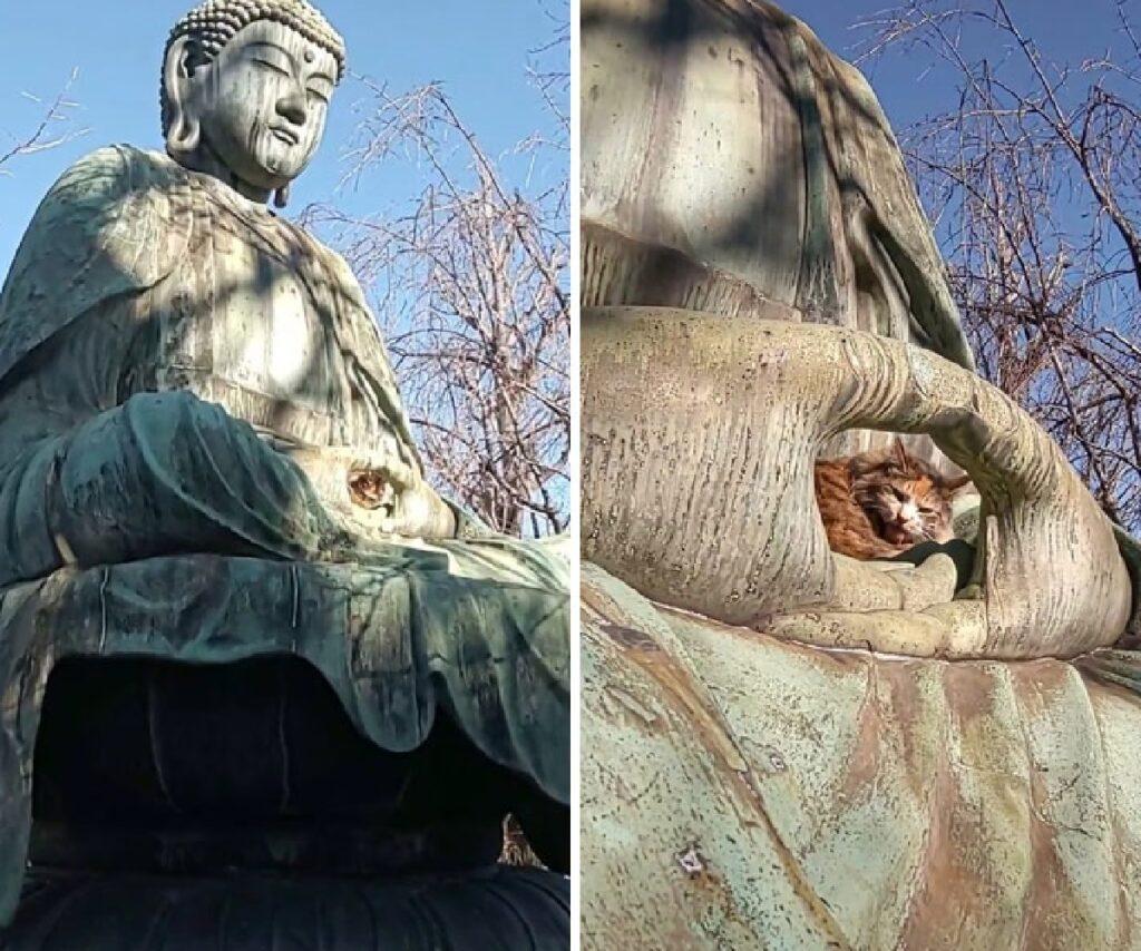gatto al centro della statua