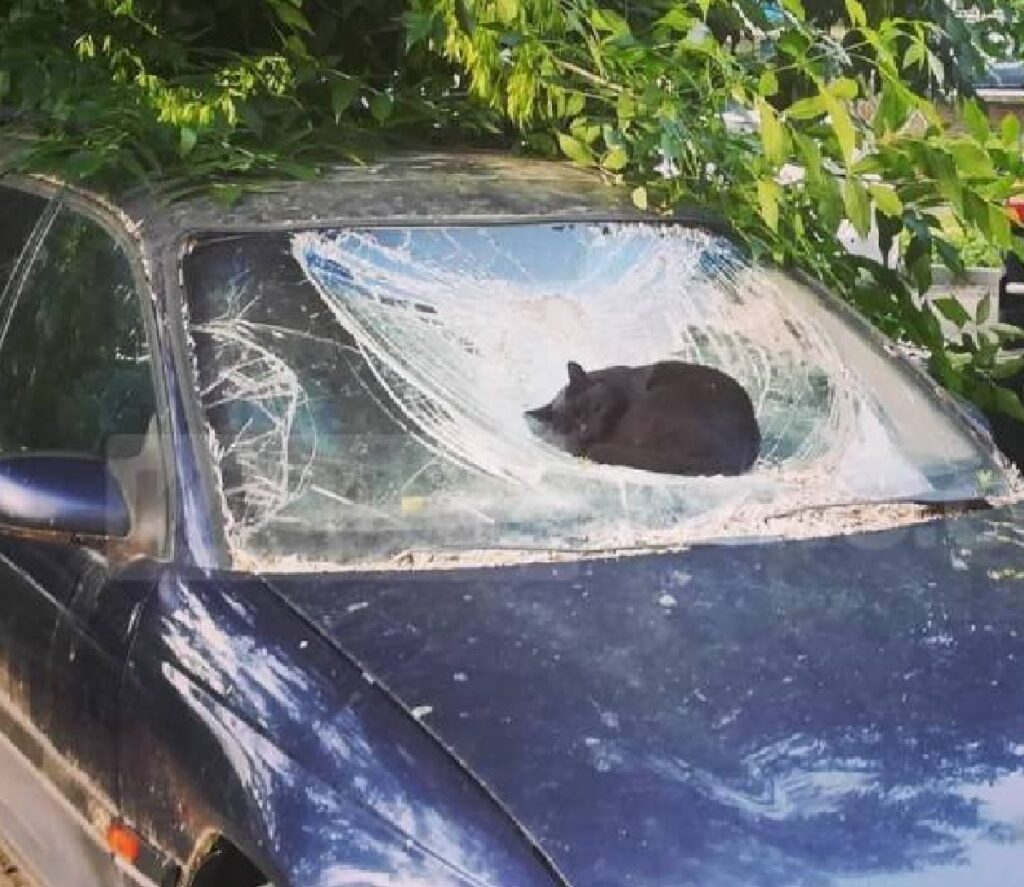 gatto sopra auto distrutta