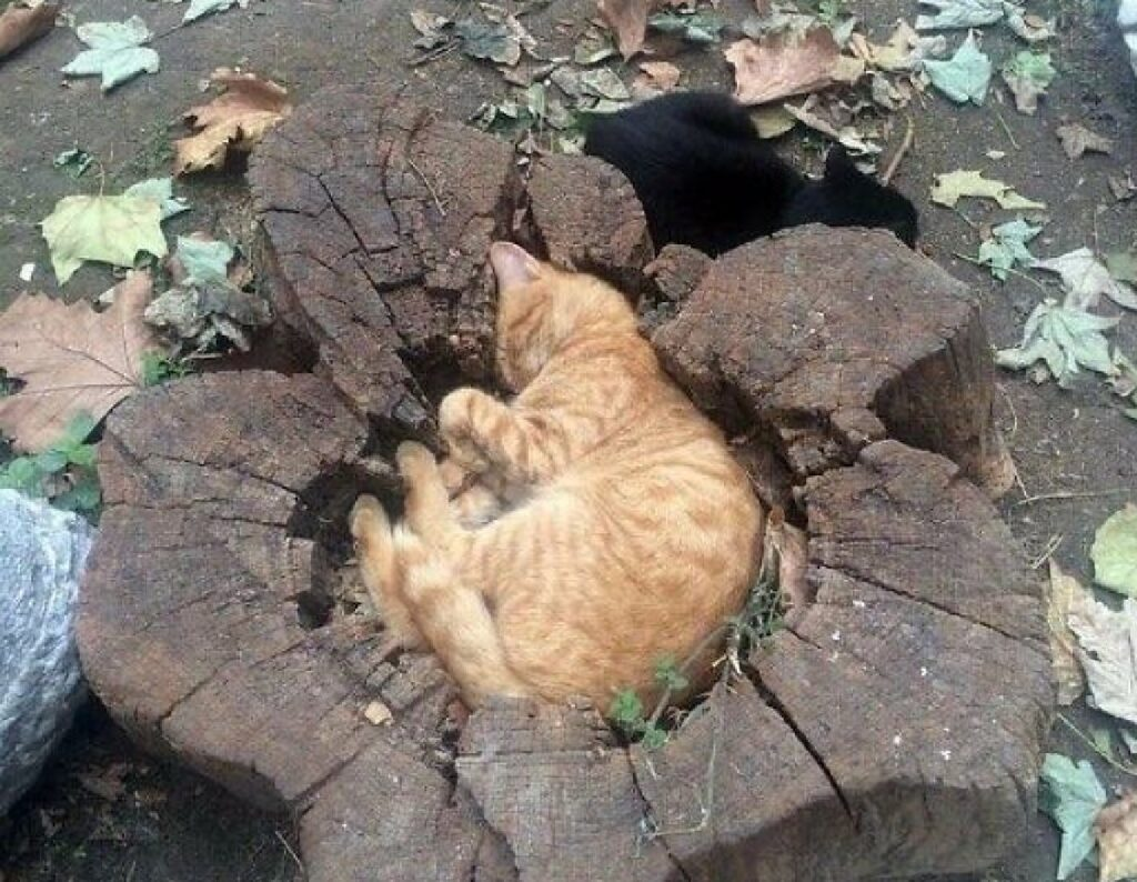 gatto in mezzo tronco