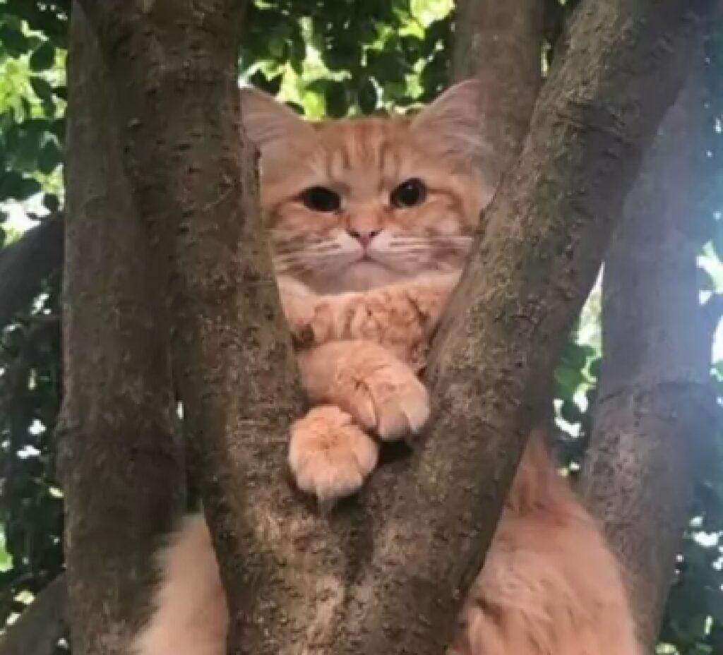 gatto rosso su albero