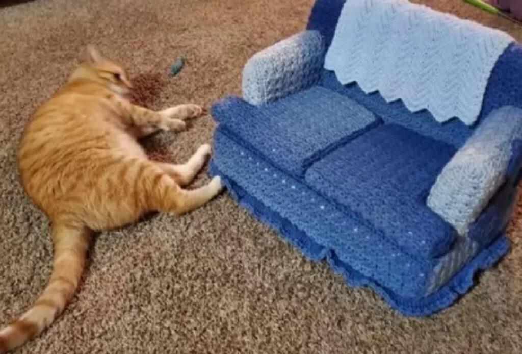 gatto rosso vicino mini divano