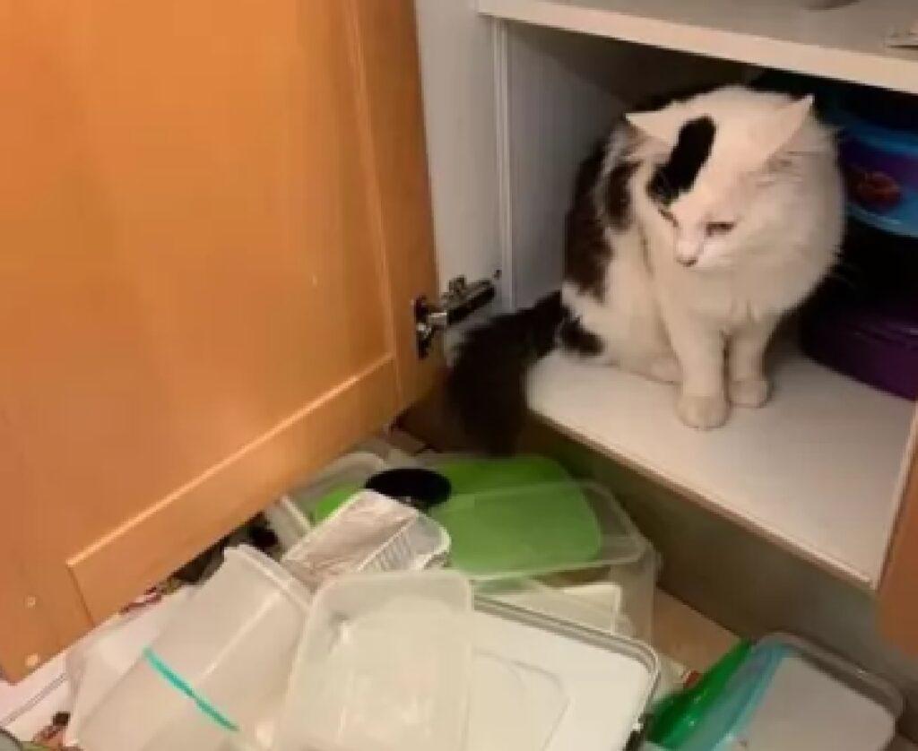 gatto getta tutto per terra