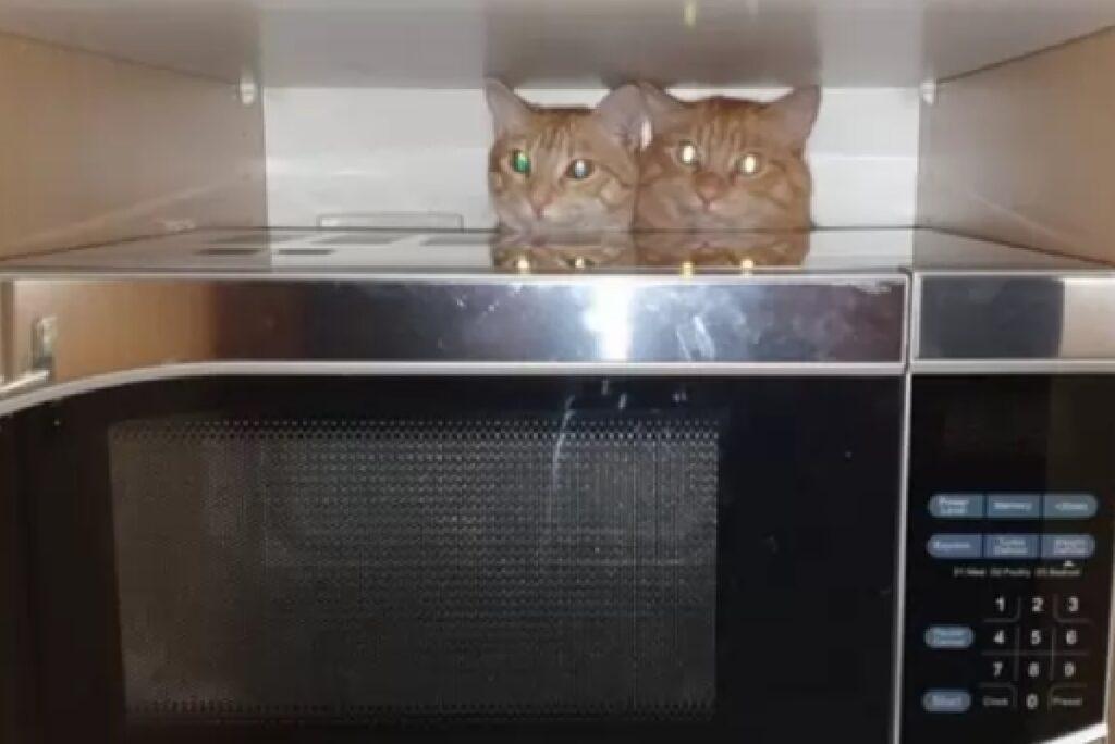 due gatti dietro fornetto