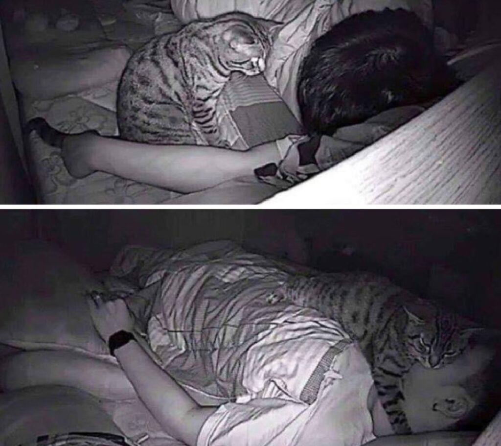 gatto tigrato dorme su faccia umano