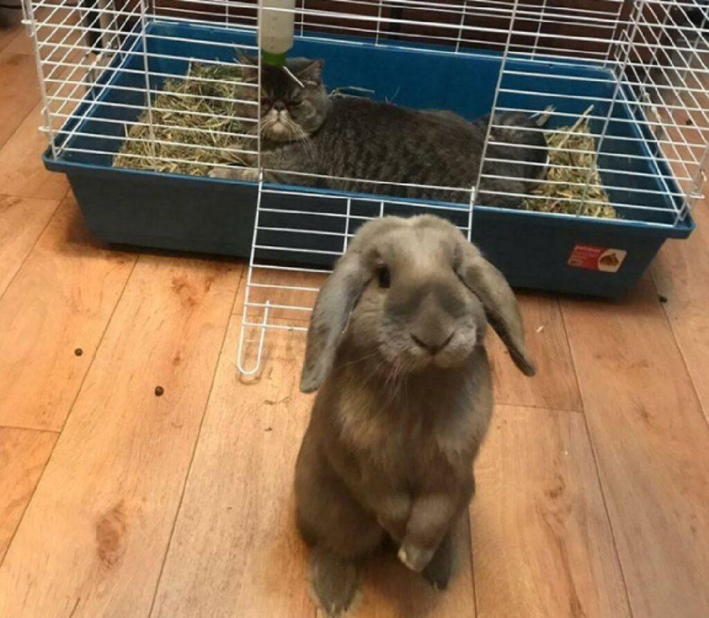 gatto ruba posto coniglio