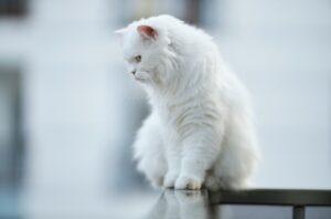 gatti che vivono comandando tutto