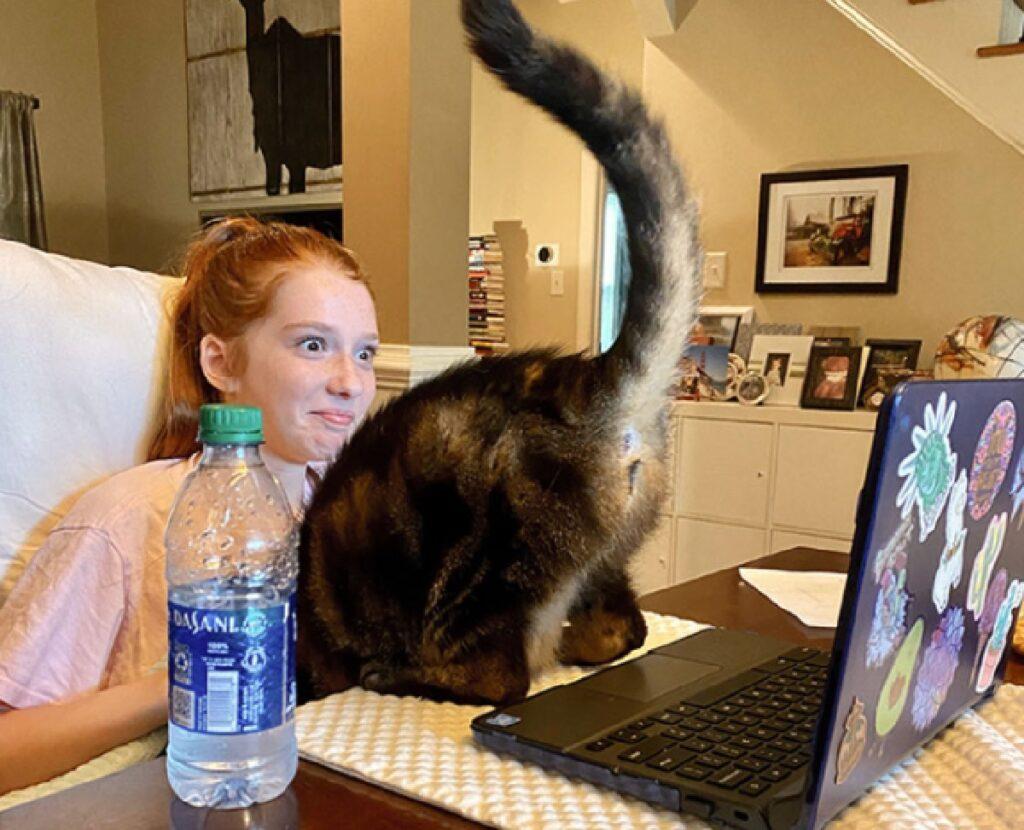 gatto mostra di dietro