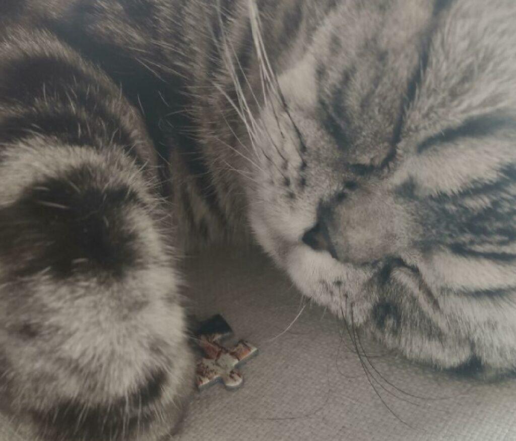 gatto pezzo puzzle mancante