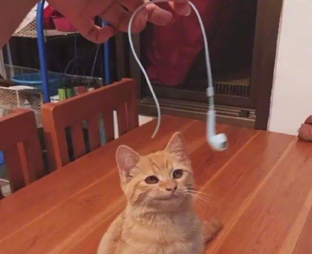 gatto soddisfatto dell'operato