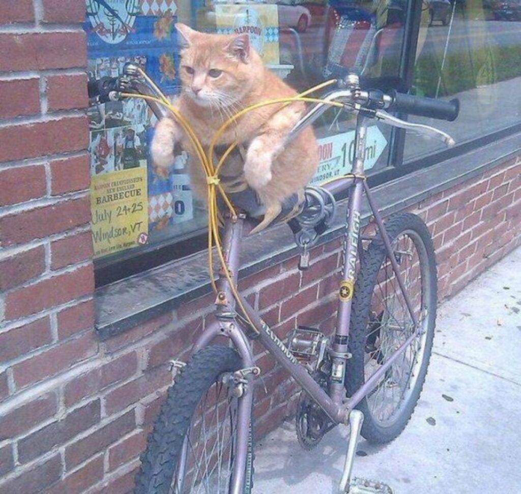 gatto bici buffo