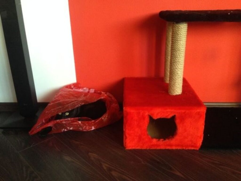 felino cuccia rossa