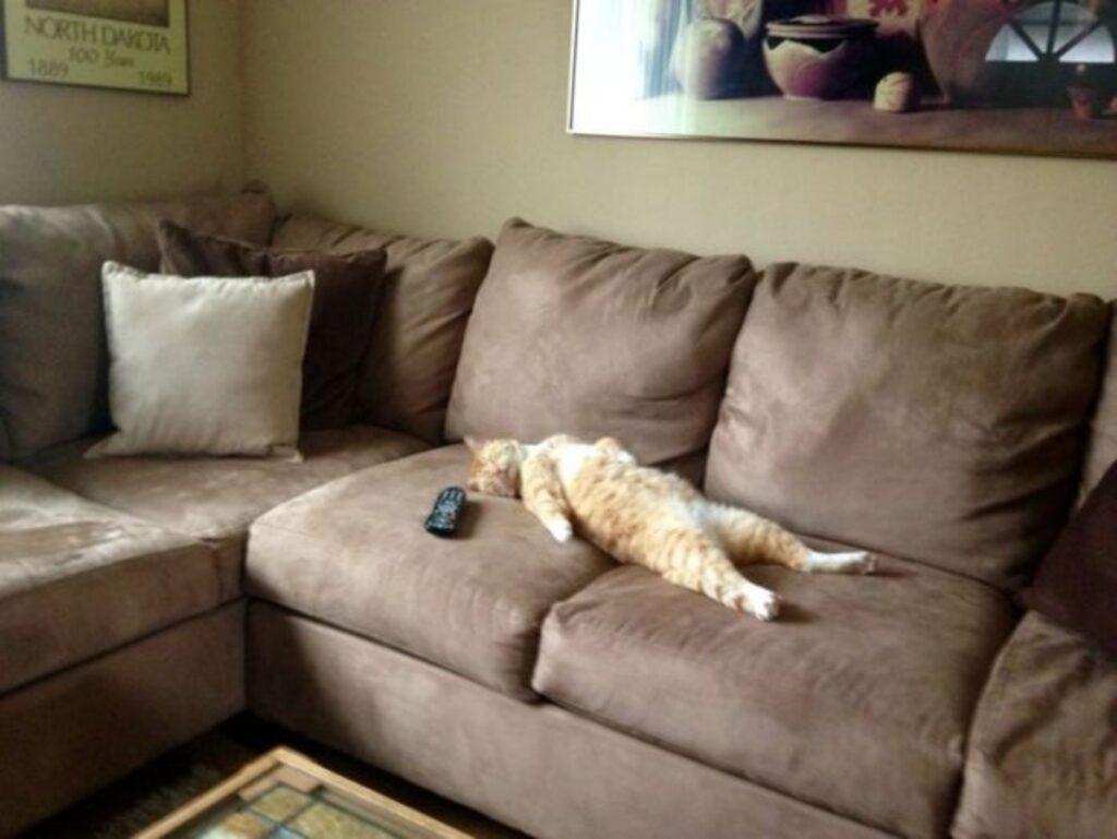 gatto spaparacchiato divano