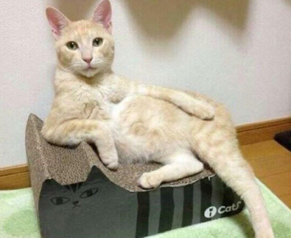 gatto rilassato su piedistallo