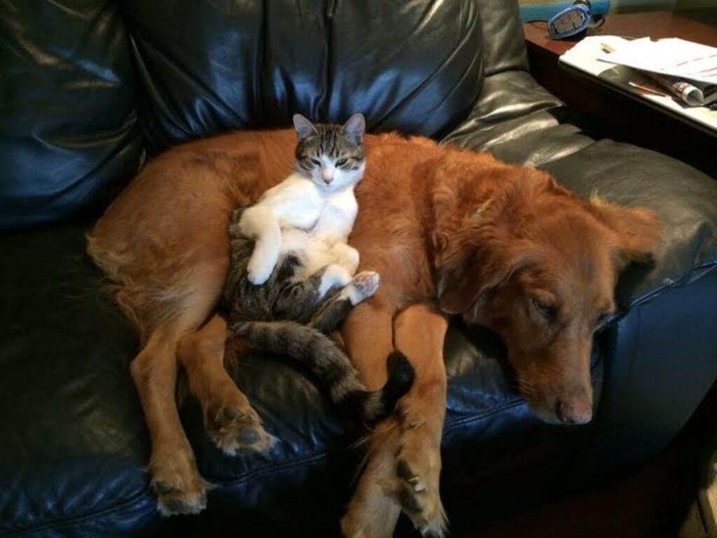 gatto nanna cucciolo