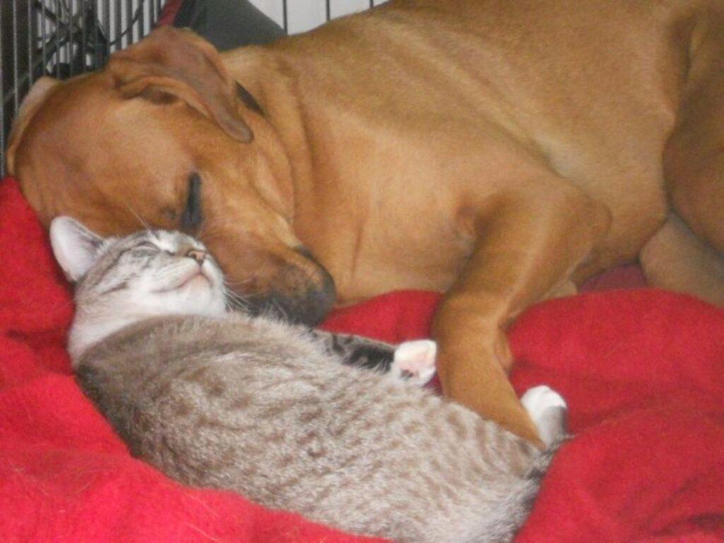 gattino amico dormire