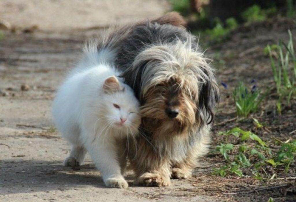 gatto amico barboncino