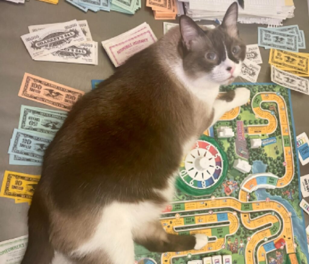 gatto vuole giocare a monopoli