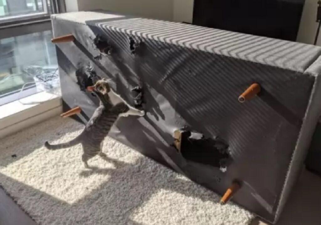 gatto ribalta un divano
