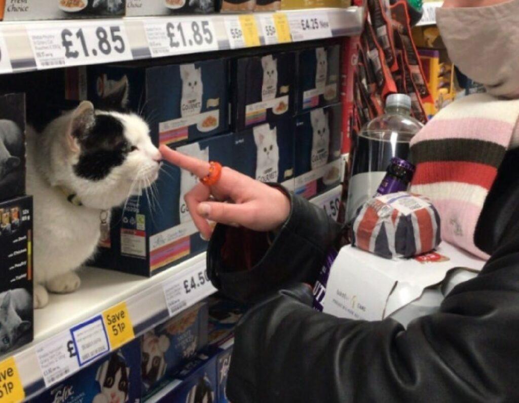 gatto nel reparto felini