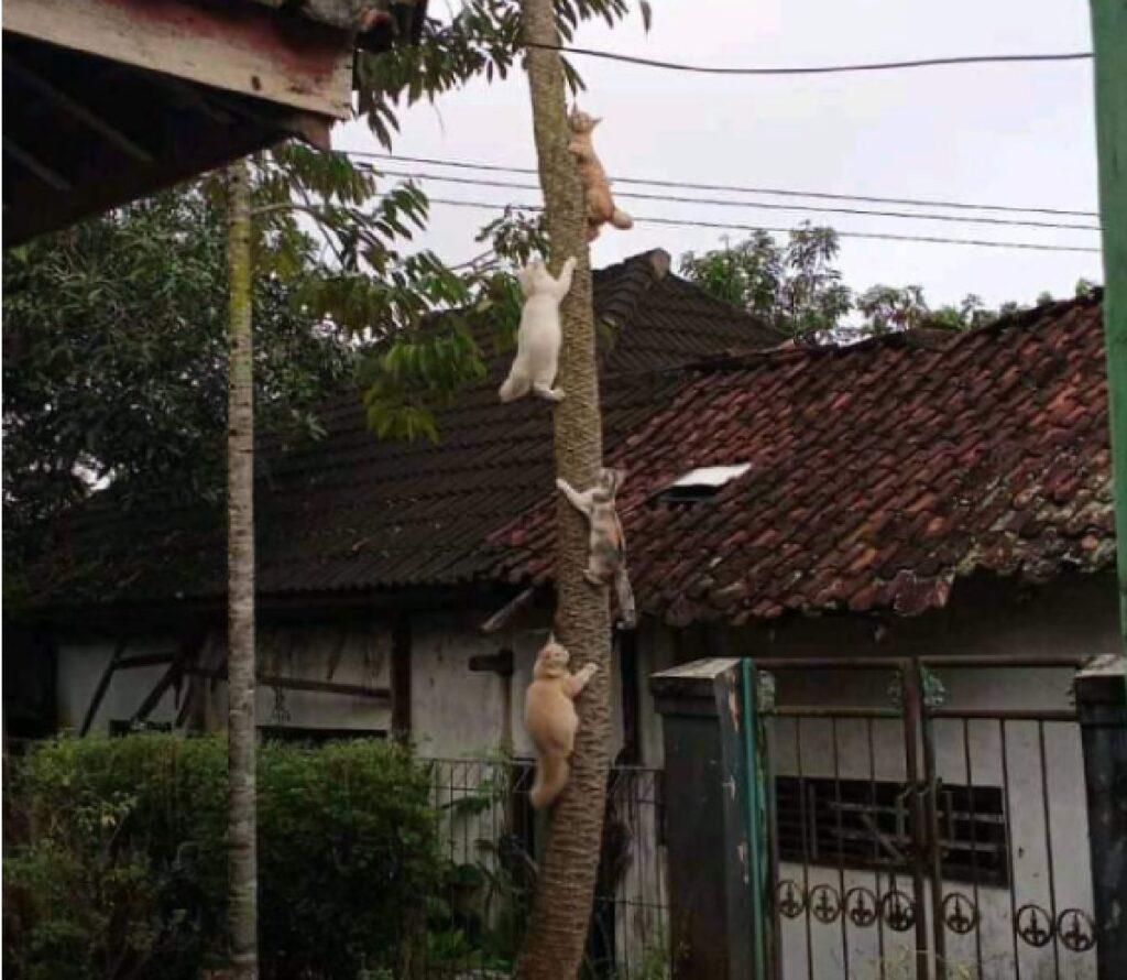 gatti arrampicati albero