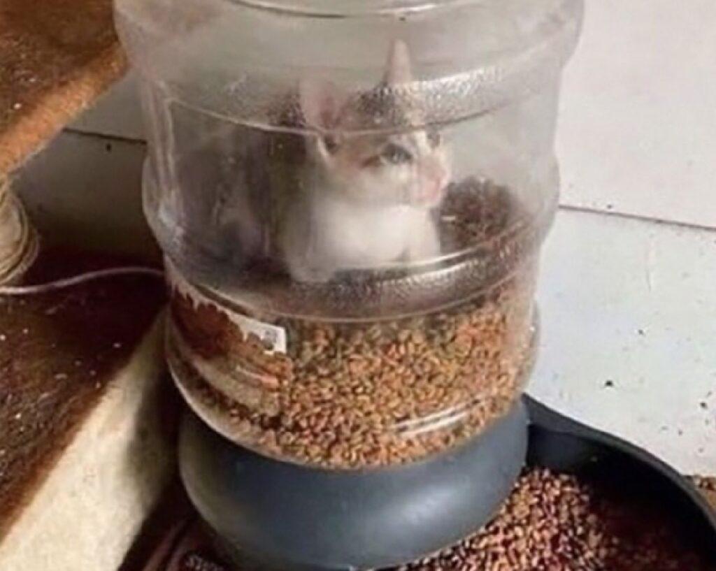 gatto dentro distributore cibo