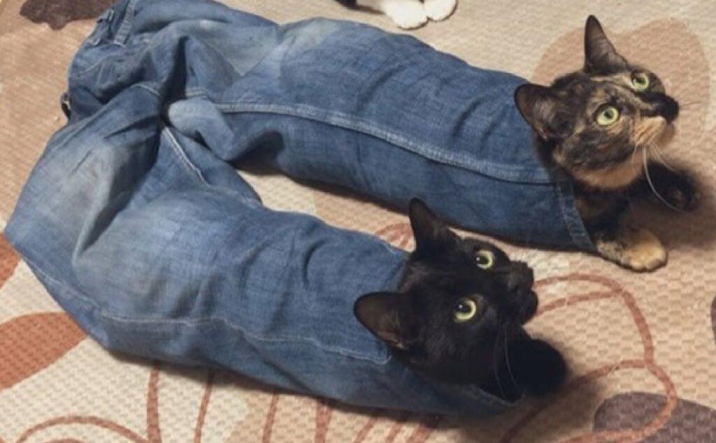 gatti nei jeans fratelli