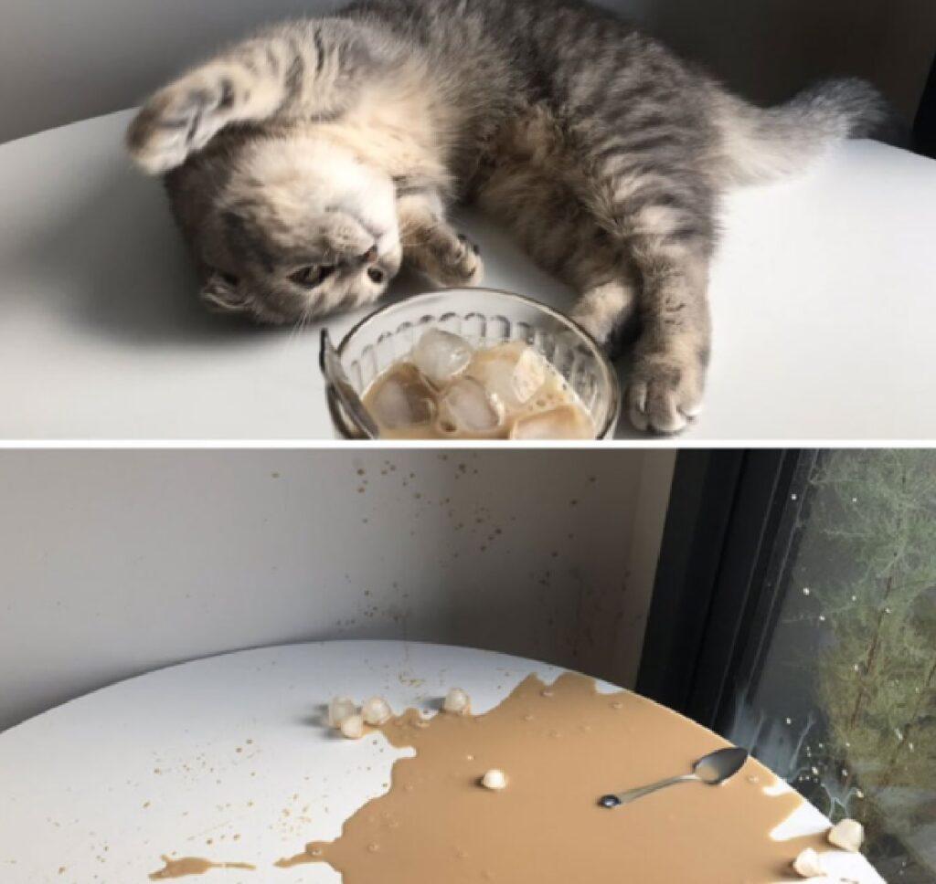 gatto rovescia colazione