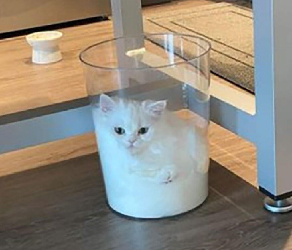 gatto dorme cesto trasparente