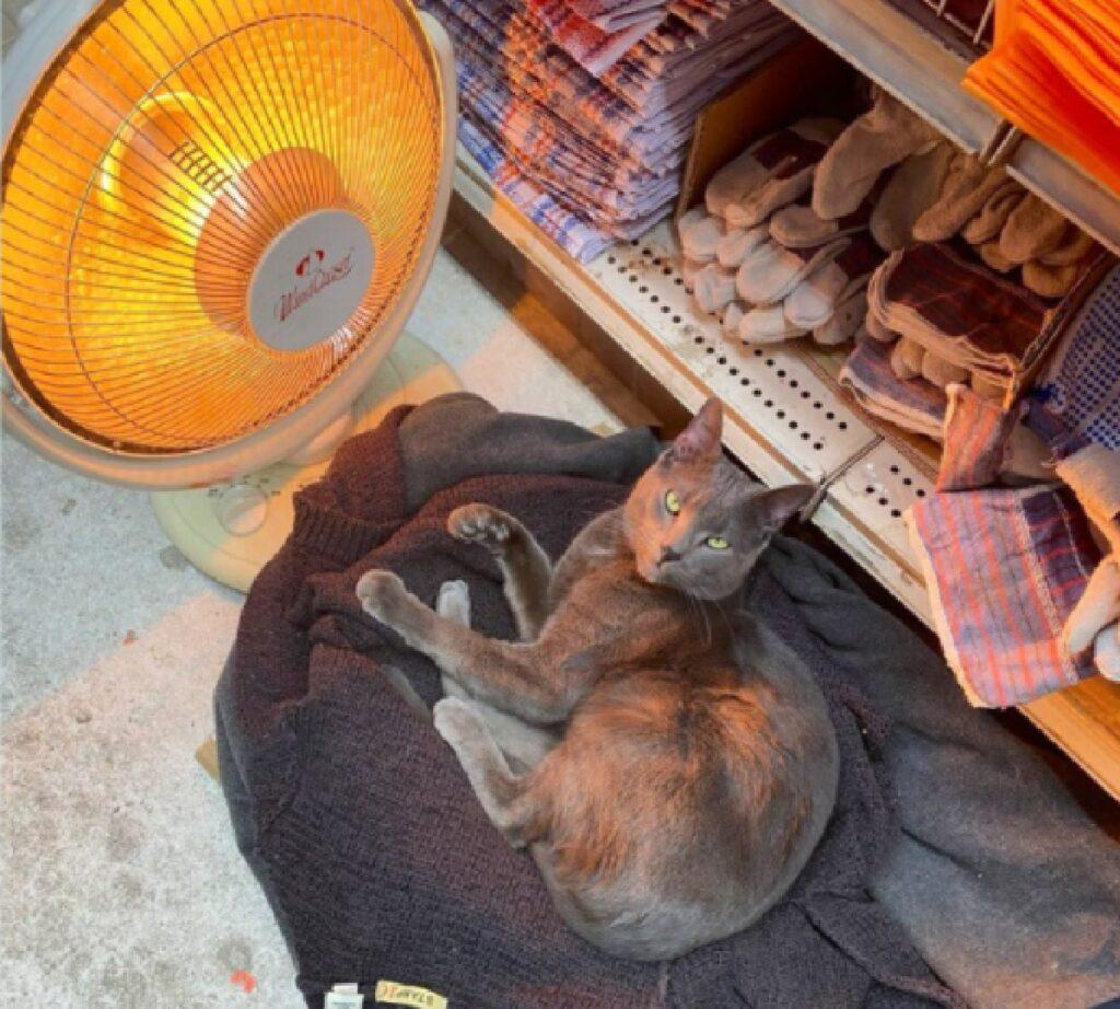 gattino nero dorme in negozio
