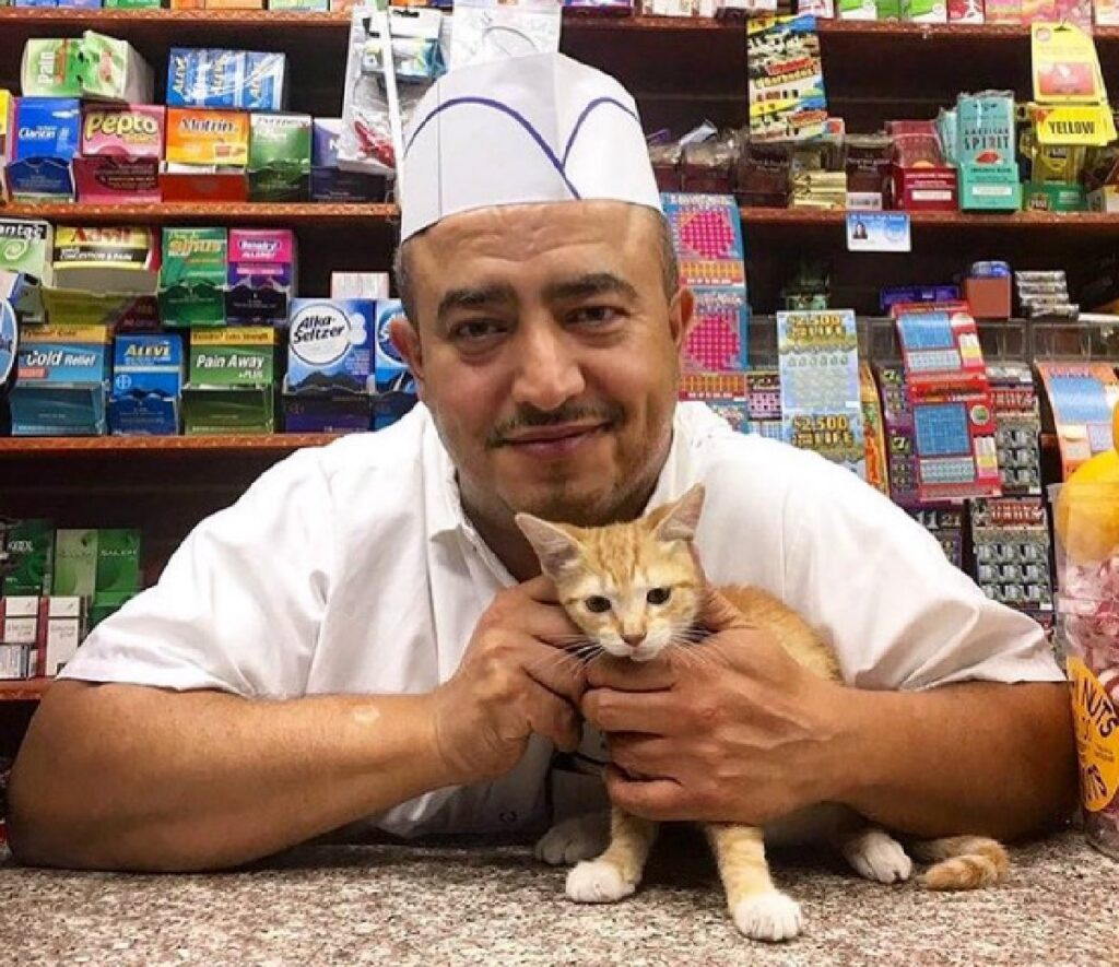 gattino fra le mani proprietario