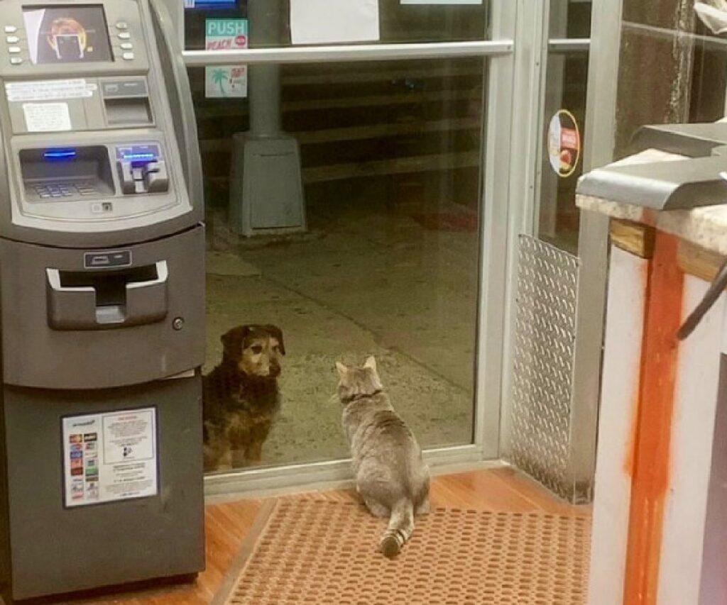 gattino fissa cane all'entrata