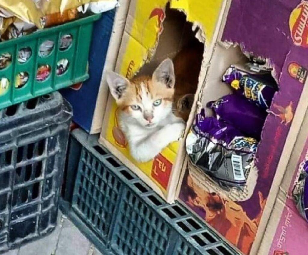 gatto dentro cartone patatine