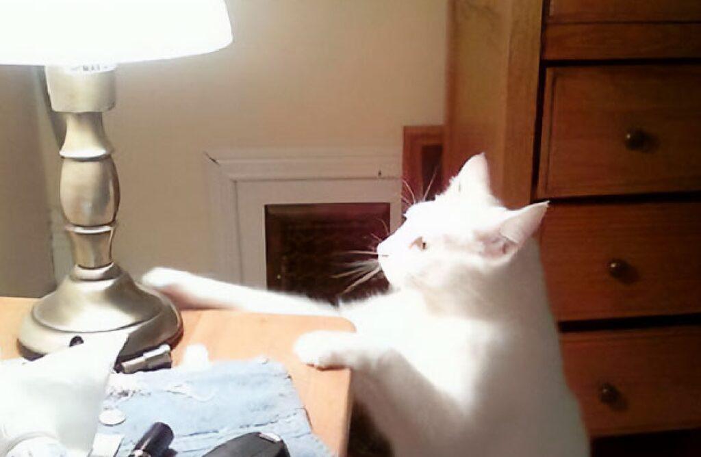 gatto accende la luce in camera