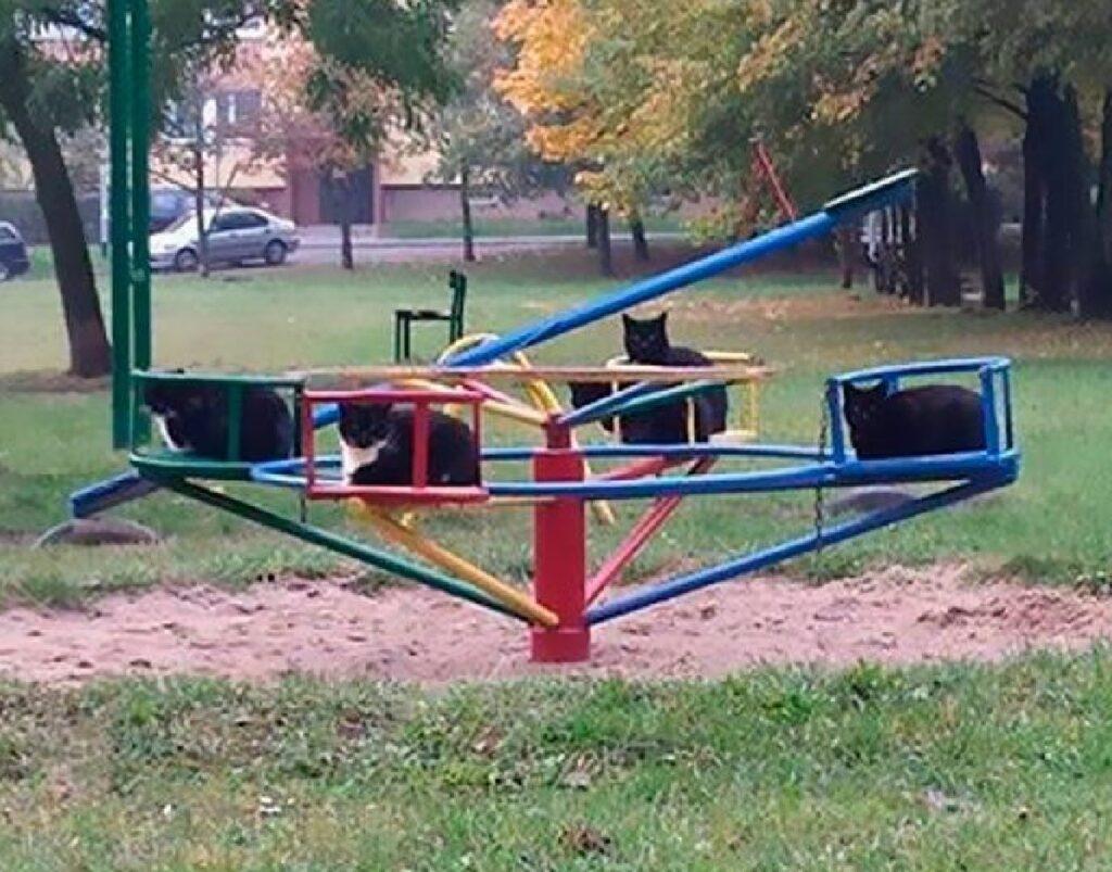 gatti sulla girella parco