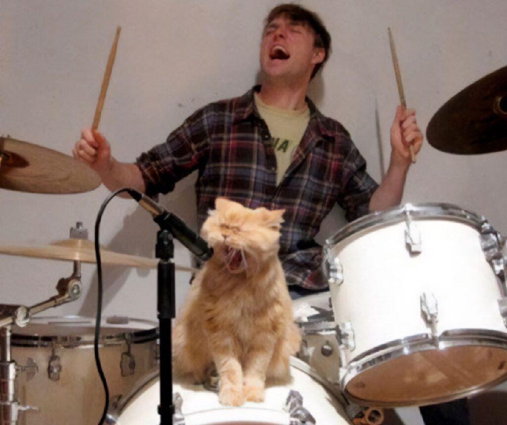gatto canta con band