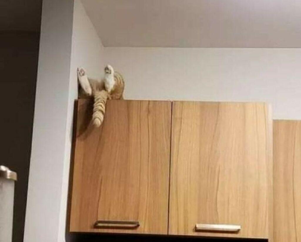 gatto nascosto scomparti cucina