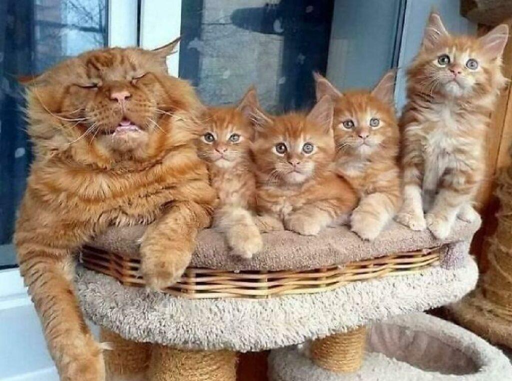 gatto padre foto famiglia