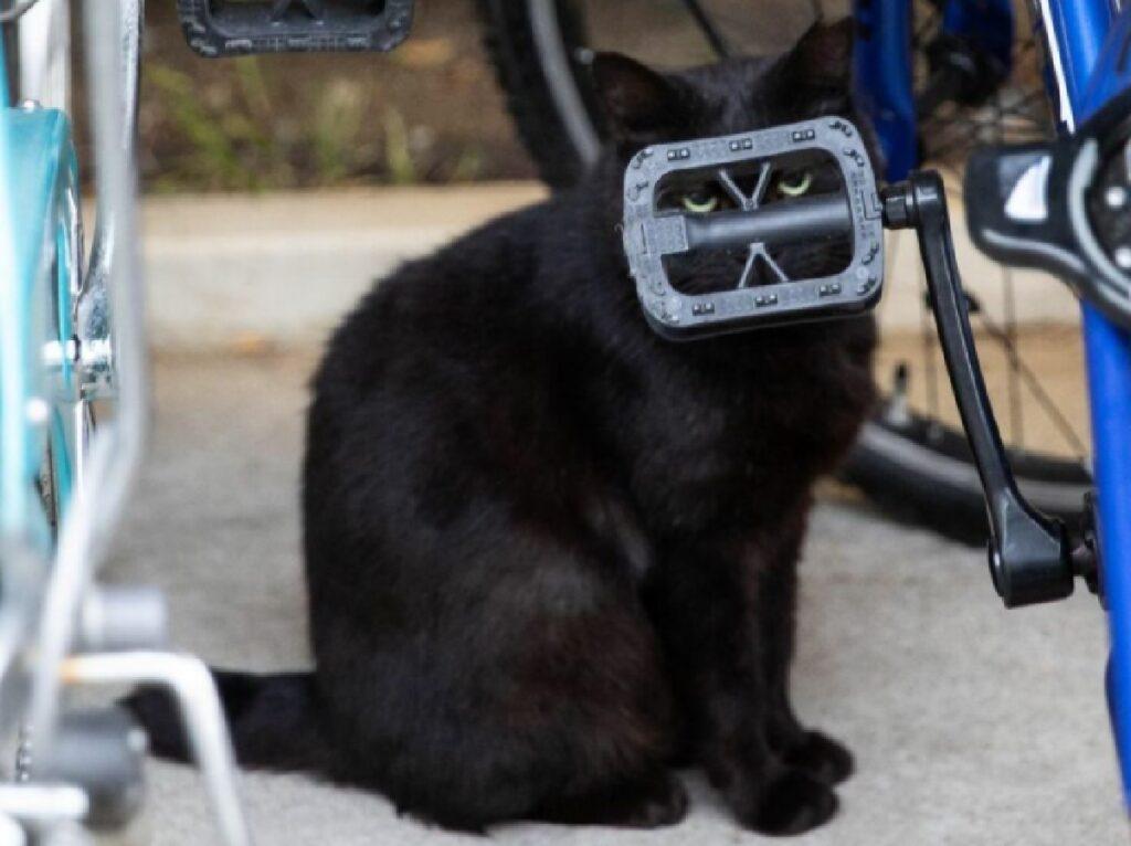 gatto nero dietro pedale