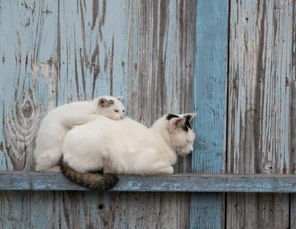 mamma gatto piccolino schiena
