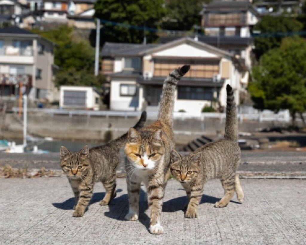 due gatti insieme alla madre