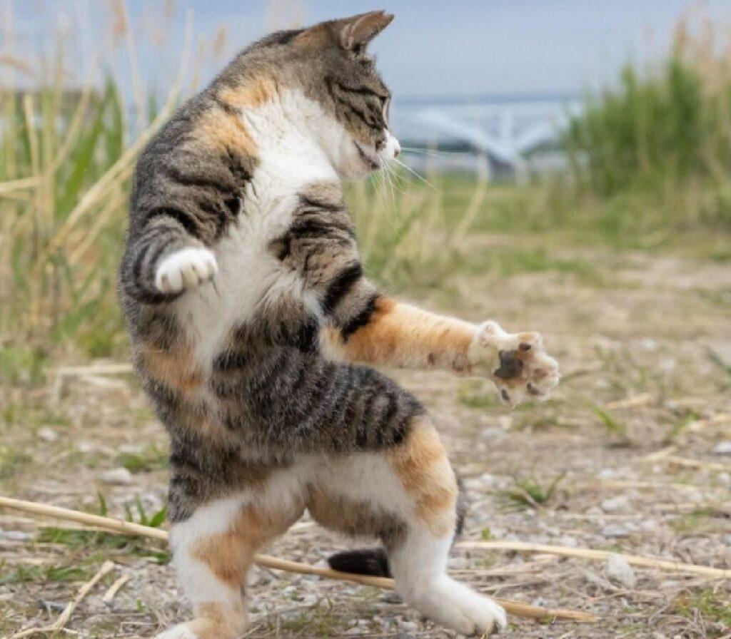 gatto su due zampe