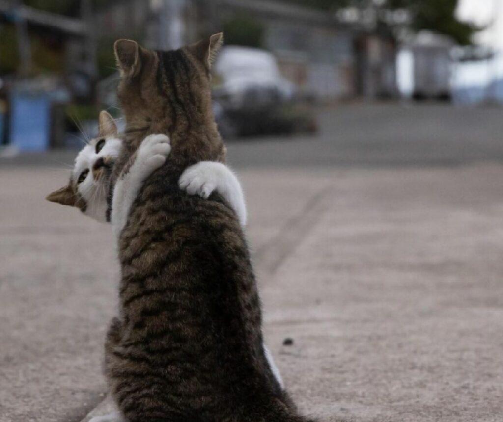 gatti abbraccio amichevole