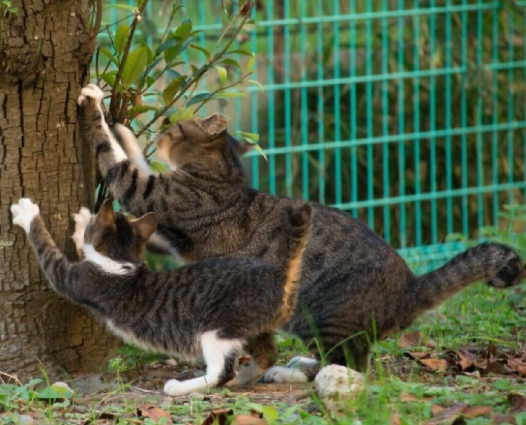 gatti raschiano tronco legno